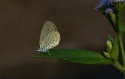Nära övre för fjäril Arkivfoto