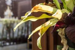 Nära övre för Houseplant Fotografering för Bildbyråer