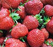 Nära övre för jordgubbar Fotografering för Bildbyråer