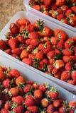 Nära övre för jordgubbar Bakgrund arkivfoton