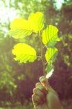 Nära övre för Leaf Royaltyfri Fotografi