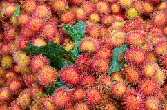 Nära övre för Rambutan Arkivfoto