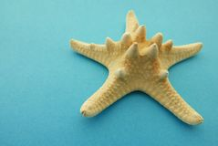 Nära övre för sjöstjärna Arkivfoton