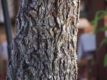 Nära övre för Treestam Arkivfoton
