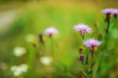 Nära övre för växt Royaltyfria Bilder