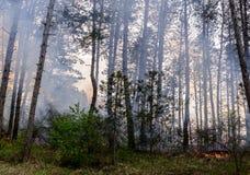 Nära övre foto av en pågående skogsbrand arkivfoto