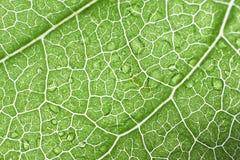 Nära övre foto för makro av ett grönt blad Royaltyfri Fotografi