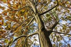 Nära övre höstträd med sidor i filialer stock illustrationer