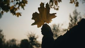 Nära övre hand av kvinnan som rymmer den gula lönnlövet och solen som skiner till och med den Ljus bris rör filialer av träd arkivfilmer