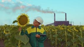Nära övre pojkeagronom med minnestavlaPC:N på solrosfält på solnedgången stock video