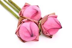 Nära övre rosa lotusblomma på vitbakgrund Royaltyfria Foton