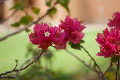 N?ra ?vre sikt av h?rliga blommor i en tr?dg?rd - Bild arkivbilder