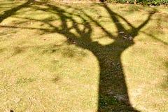 nära av en skugga av ett lönnträd på gräset på en gräsplan parkera upp med några torra sidor på jordningen royaltyfri foto