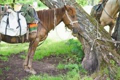 Nära en ställning och vänta för trädhästar Fotografering för Bildbyråer