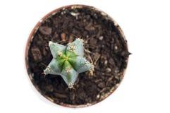 Nära för kaktus som isoleras upp Royaltyfri Fotografi