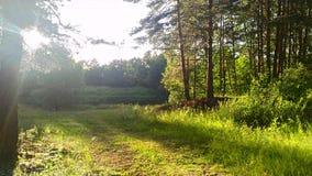 nära floden Fotografering för Bildbyråer