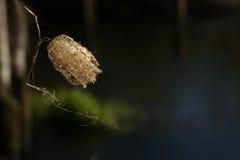 Nära foto av krypet täcker med en plasthinna floden på bakgrunden av vatten Arkivfoton