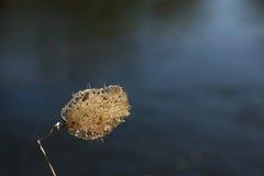 Nära foto av krypet täcker med en plasthinna floden på bakgrunden av vatten Arkivfoto