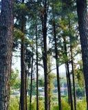 Nära foto av longstanding trän arkivbild