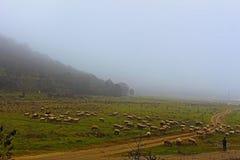 Nära Rupiten som korsar en skarv med djur och en herde med dem Arkivfoto