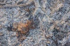 Nära sikt av askaen från den wood och plast- bränningen som abstrakta lodisar Royaltyfri Fotografi