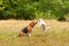 Nära sikt av att slåss för katt och för hund royaltyfri foto