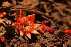 nära sikt av blomfodret av granatäppleblomman arkivbilder