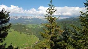 Nära sikt av en gran mycket av kottar på en storartad berglandskapbakgrund Arkivbilder