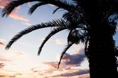 Nära sikt av mörka former av palmträdet arkivbild