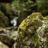 Nära sikt av naturen i Euskadi Royaltyfri Foto