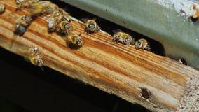 Nära tillträdesplan in i bikupan, biflugan snabbt och avresan Royaltyfri Bild