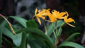 Nära trevlig gul orkidé från vänster till höger stock video