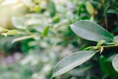 Nära upp grönt blad på grön naturbakgrund arkivbilder