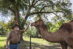 Nära vänner en man och en kamel Arkivbilder