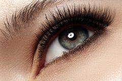 Närbildöga med naturligt smink för modeljus, extra långa och volymögonfrans Fotografering för Bildbyråer