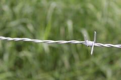 Närbild av Barb Wire med högväxt grönt gräs som är suddigt ut i bakgrund Royaltyfri Bild