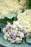 Närbild av blomkålen royaltyfri foto