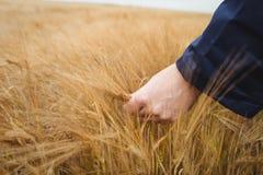 Närbild av bonden som kontrollerar hans skördar Arkivbild