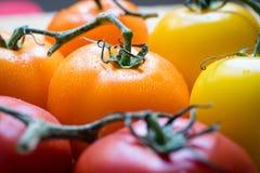 Närbild av Colorfull tomater Fotografering för Bildbyråer