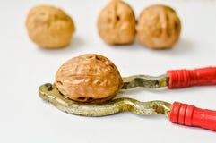 Närbild av den hela valnötter och nötknäpparen royaltyfria bilder