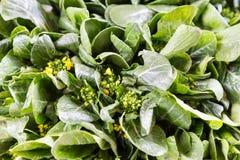 Närbild av den lövrika grönsaken för sund organisk choy summa Arkivbild