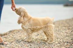 Närbild av den mänskliga handen som matar hans hund Royaltyfria Foton
