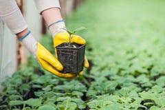 Närbild av den trädgårds- arbetaren Fotografering för Bildbyråer
