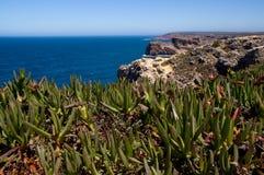 Närbild av den typiska atlantiska floran Arkivfoton