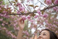 Närbild av den unga kvinnan som når för en rosa blomning på en trädfilial, utomhus i parkera i vår Arkivbild