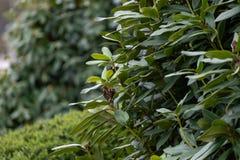 Närbild av den utsmyckade gröna växten royaltyfri foto