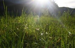 Närbild av det gräs- fältet mot den ljusa solen Arkivbild