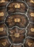 Närbild av en afrikan sporrad sköldpaddas ryggsköld Royaltyfri Fotografi