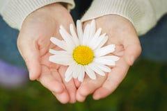Närbild av en blomma i childshänder arkivbild