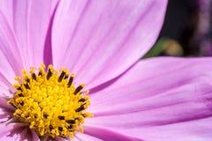 N?rbild av en blomma med fritt utrymme f?r text fotografering för bildbyråer